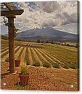 View Toward Mt Shasta Horizontal Acrylic Print
