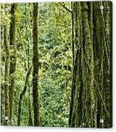 View Within A Rain Forest Acrylic Print