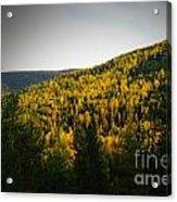 Vignette Of Autumn Gold  Acrylic Print