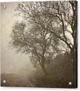 Vigilants Trees In The Misty Road Acrylic Print
