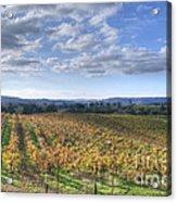 Vines In Fields Acrylic Print