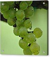 Vineyard Grapes I Acrylic Print
