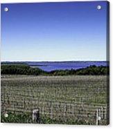 Vineyard Of Leelanau Michigan Acrylic Print