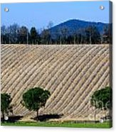 Vineyard On A Hill With Trees Acrylic Print