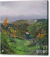 Vineyard Path Acrylic Print