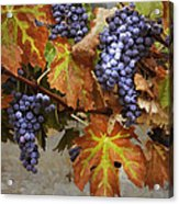 Vineyard Splendor Acrylic Print