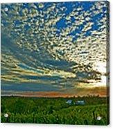 Vineyard Sunset I Acrylic Print