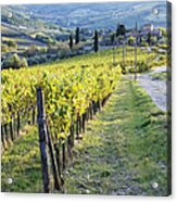 Vineyards And Farmhouse Acrylic Print
