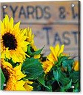 Vineyards And Winery Tastings Acrylic Print