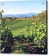 Vineyards In The Yarra Valley, Victoria, Australia Acrylic Print
