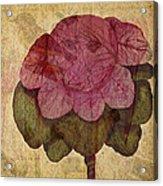 Vintage Cabbage Acrylic Print by Bonnie Bruno