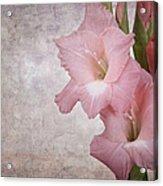 Vintage Gladioli Acrylic Print by Jane Rix