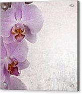 Vintage Orchids Acrylic Print