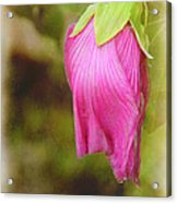 Vintage Pendant Acrylic Print by Judi Bagwell