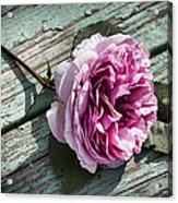 Vintage Pink English Rose And Peeling Paint Acrylic Print