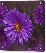 Vintage Purple  Acrylic Print by Richard Cummings