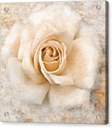 Vintage Rose V Square Acrylic Print