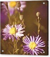 Vintage Violet  Acrylic Print