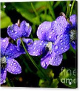 Violet And Raindrops Acrylic Print