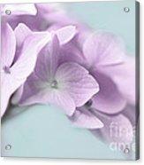 Violet Hydrangea Flower Macro Acrylic Print