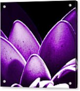 Violet Lotus Acrylic Print