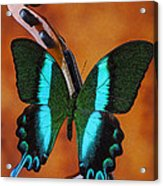 Violin With Green Black Butterfly Acrylic Print