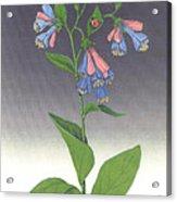Viriginia Bluebells Acrylic Print