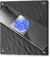 Virus On Microscope Slide Acrylic Print by Laguna Design