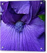 Vision In Violet Acrylic Print