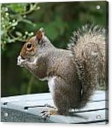 Visiting Squirrel Luncheon Acrylic Print