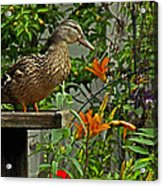 Visitor To The Feeder Acrylic Print
