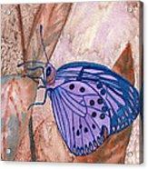 Visualization Butterfly Acrylic Print