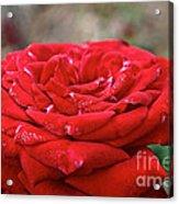 Viva Red Acrylic Print