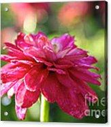Vivid Floral Acrylic Print
