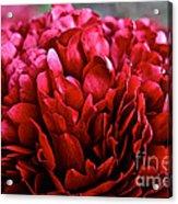 Vivid Red Acrylic Print
