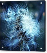 Voice Of A Thistle Acrylic Print