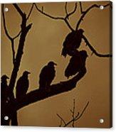 Vulture Island Acrylic Print