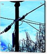 Vulture On Phone Pole Acrylic Print