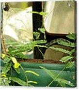 Vw Bug Going Green Acrylic Print