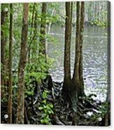 Waccamaw View II Acrylic Print