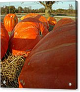 Wagon Ride For Pumpkins Acrylic Print
