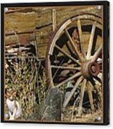 Wagon Wheel Cat Acrylic Print