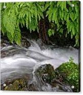 Wahkeena Falls One Acrylic Print