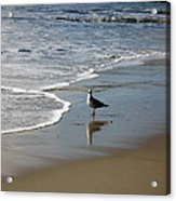 Waiting For Lunch On Shore Acrylic Print