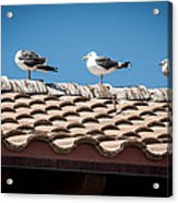 Waiting For Take Off Acrylic Print