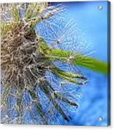 Waiting For The Wind Acrylic Print