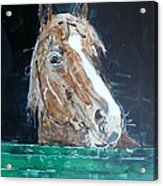 Waiting - Horse Portrait Acrylic Print