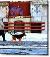 Walk On The Cold Side Acrylic Print