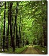 Walking Away Forest Path  Acrylic Print