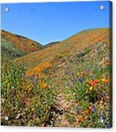 Walking Thru The Wildflowers Acrylic Print